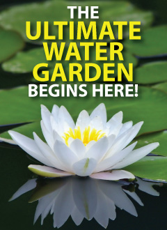 The Ultimate Water Garden Starts Here