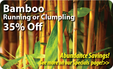 Bamboo 35% Off